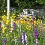 AO_gardenwith purple